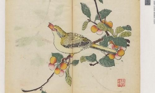 Cổ thư in màu vẹn nguyên kỳ lạ suốt 300 năm - ảnh 4