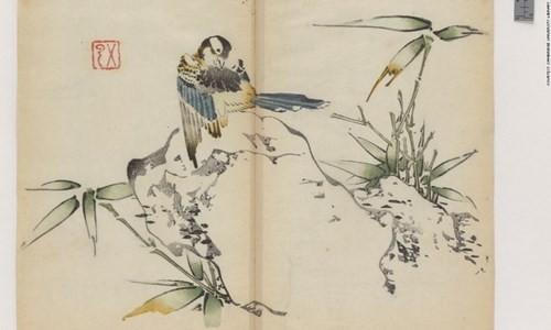 Cổ thư in màu vẹn nguyên kỳ lạ suốt 300 năm - ảnh 6