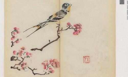 Cổ thư in màu vẹn nguyên kỳ lạ suốt 300 năm - ảnh 8