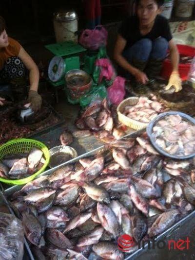 Kinh hoàng cá ươn, cá thối được phù phép thành…đặc sản - ảnh 1