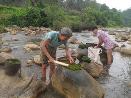 Làm sạch rêu đá