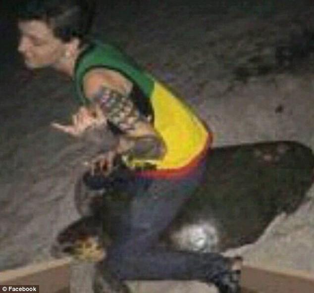 Cô gái có nguy cơ phải ngồi tù 5 năm vì ngược đãi rùa biển - ảnh 1