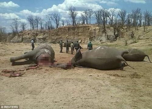 Ớn lạnh, nhân viên sở thú chặt đầu voi vì chê lương thấp - ảnh 1
