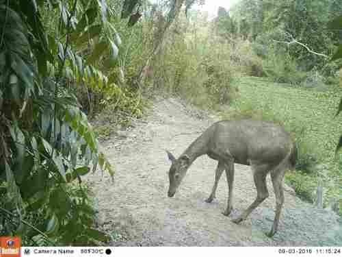 Vườn quốc gia Cà Mau phục hồi nhiều loài có nguy cơ tuyệt chủng - ảnh 1