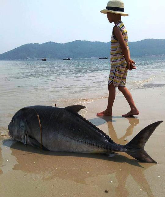 'Hơn 50 năm sống với biển, tôi chưa bao giờ chứng kiến cảnh này' - ảnh 2