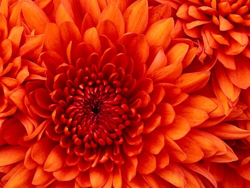 Hy hữu: Dùng hoa làm CMND để đăng ký di động - ảnh 3