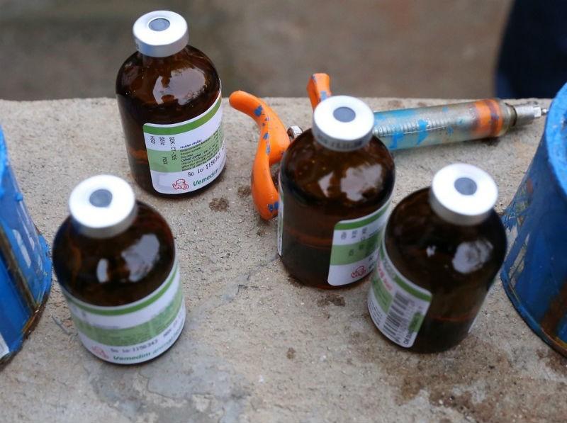 Xử phạt người tiêm thuốc 'có nguy cơ gây ung thư tủy' vào heo - ảnh 1