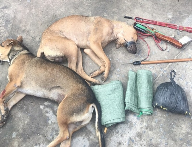 Nghi can trộm chó dùng ớt bột tấn công lực lượng truy bắt - ảnh 2