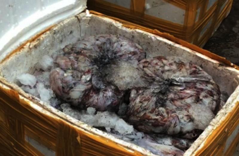 Bắt hơn 1 tấn cá, mực thối chuẩn bị vào TP.HCM tiêu thụ - ảnh 1
