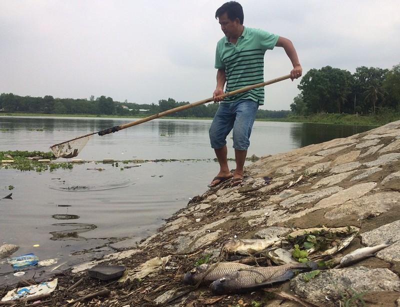Bình Dương: Cá chết nổi trắng hồ Từ Vân - ảnh 1